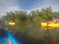 Kayaking the mangroves